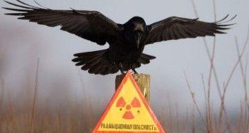 Chernobyl: 25 años no son ná (radiactivamente)