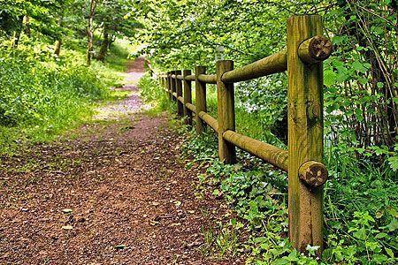 Ruta de senderismo en un bosque gallego
