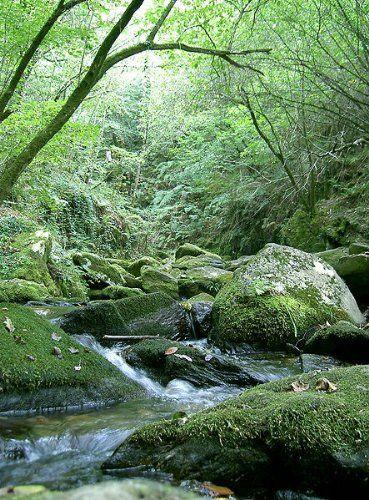 Fragas del río Eume