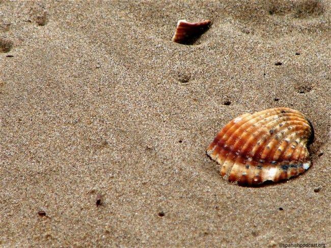 único tipo de conchas que había en la playa (Estepona - Málaga)